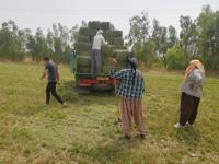 دومين سيستم سنتر پيوست در مزرعه آموزشي و پژوهشي مهران نصب گرديد
